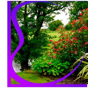 Dinamic Clean Jardineria y Parquización